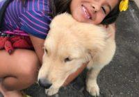 Cães e gatos da Fazenda Modelo, em Guaratiba, estão à espera de carinho neste sábado