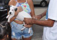 Santa Cruz e Campo Grande terão vacinação contra a raiva em  postos de atendimento drive thru