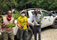 Parque Estadual da Pedra Branca unidade Realengo recebe mutirão de reflorestamento