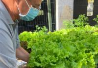 Ciep em Senador Vasconcelos adota a aquaponia: viveiro de peixes e estufa de hortaliças conectados
