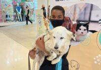 Ainda dá tempo: adote um animal em Bangu